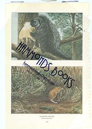 Article: Smaller Mammals of North America with Illustrations in Color from Paintings by Louis ...