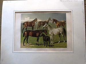 """Chromolithographie aus Mayers Konversations-Lexikon von ca 1890 (beim Artikel """"Pferde"""").:..."""
