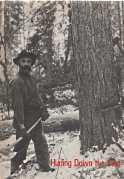 HURLING DOWN THE PINE : the story of the Wright, Gilmour and Hughson families, timber and lumber ...