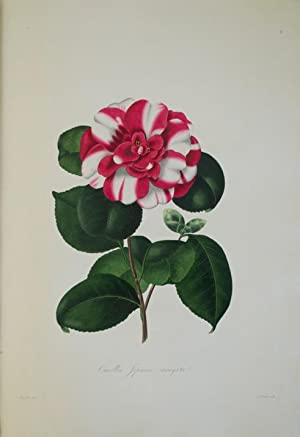 Illustrations and Descriptions of the Plants which: BOOTH, William Beattie