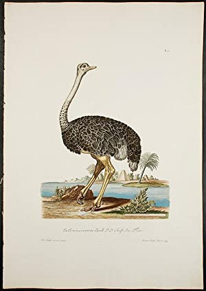 Ostrich]: KNORR, Georg Wolfgang (1705-1761)