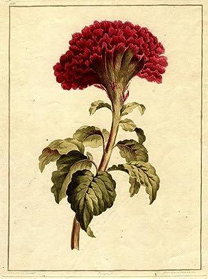 Coxcomb: EDWARDS, John (1742-1815)