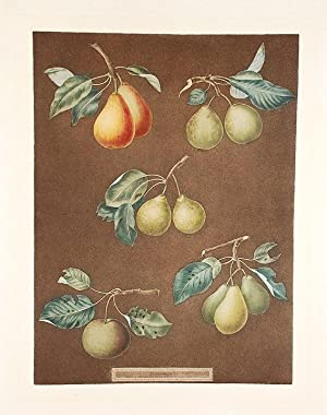Pears] King Catherine Pear (Catherine Royal); Lemon Pear; Late Petite Muscat; Oignon La Reine; Long...