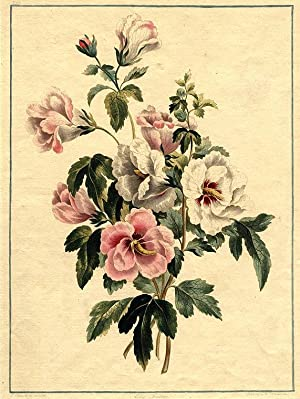 Althae Frutrex: EDWARDS, John (1742-1815)