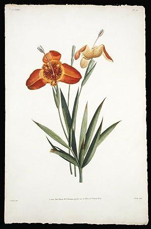 Fleur de Tigrine: PREVOST, Jean Louis