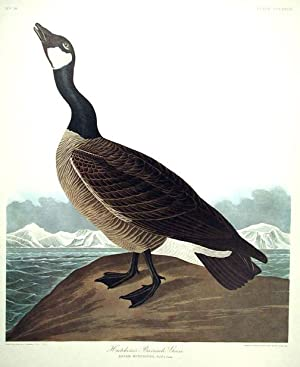 "Hutchins's Barnacle Goose. From ""The Birds of America"" (Amsterdam Edition): AUDUBON,..."