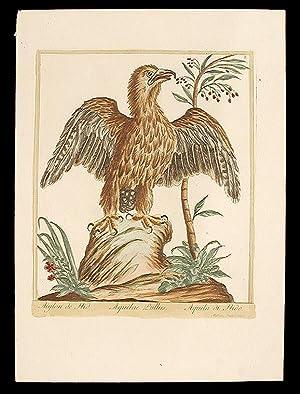 Aiglon de Nid [Nesting Eagle]: BOUCHARD, Maddalena