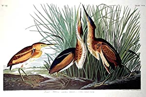 "Least Bittern. From ""The Birds of America"" (Amsterdam Edition): AUDUBON, John James (1785-..."
