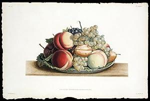 Assiette de Chasselas musque, Muscat noir, Prune-Albert, et Peche admirable: PREVOST, Jean Louis (...