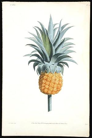 Etude d'un Ananas: PREVOST, Jean Louis
