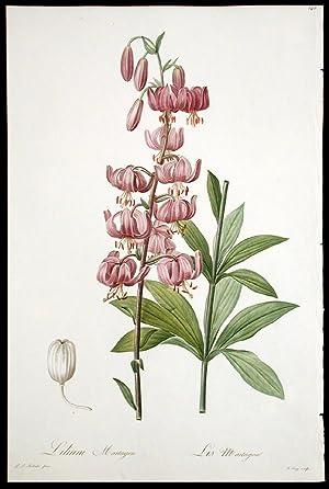 Lilium Martagon / Lis Martagon [Martagon Lily]: REDOUTÉ, Pierre-Joseph (1759-1840)