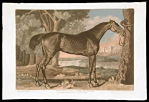 Pangloss belonging to Lord Grosvernor: STUBBS, George engraved by ANONYMOUS