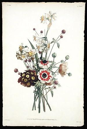 Bouquet d'Anemones, Auricules, Narcisses et Amarantine: PREVOST, Jean Louis