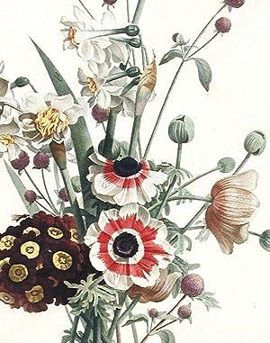 Bouquet d'Anemones, Auricules, Narcisses et Amarantine: PREVOST, Jean Louis (active circa 1760...