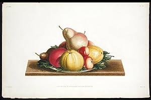 Assiette de Bon-Chretien, Calville blanc, Pomme-rose, Api: PREVOST, Jean Louis