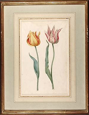 Tulipa var.' (A red and yellow tulip and a white and rose-coloured tulip): DUTCH SCHOOL (17th ...