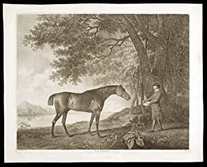 Sharke: STUBBS, George engraved by George Townly STUBBS
