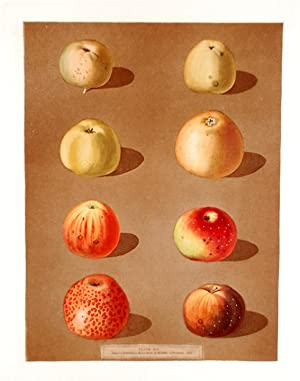 Apples] Robertson's Pippin; Blanchard's Peppin; Lemon Pippin Apple; Aromatic Pippin; ...