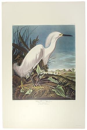 Snowy Heron: AUDUBON, John James (1785-1851)