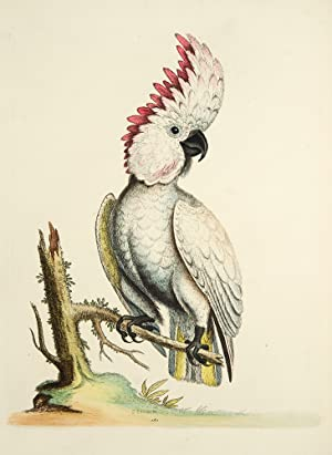 A Natural History of Uncommon Birds, and of Some Other Rare and Undescribed Animals . [With:] ...