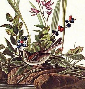 "Field Sparrow. From ""The Birds of America"" (Amsterdam Edition): AUDUBON, John James (1785..."