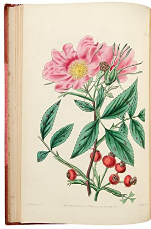 Rosarum Monographia; or, A Botanical History of Roses . A new edition: LINDLEY, John (1799-1865)