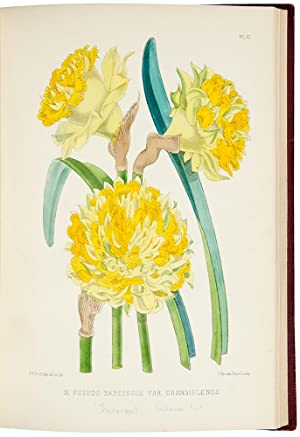 The Narcissus: its History and Culture with coloured plates and descriptions of all known species ...