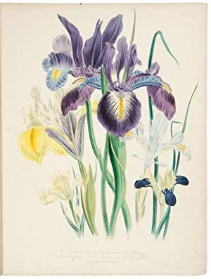 The Ladies' Flower-Garden of Ornamental Bulbous Plants: LOUDON, Jane Wells (1807-1858)
