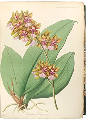 Transactions of the Horticultural Society of London: HORTICULTURAL SOCIETY OF