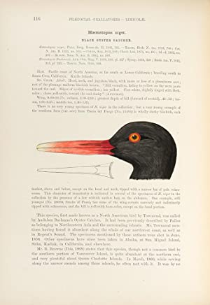 A History of North American Birds . Land Birds . [With:] Memoirs of the Museum of Comparative ...