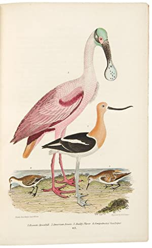 American Ornithology; or, the Natural History of the Birds of the United States. By . Wilson; with ...