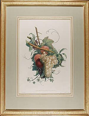 Study of Grapes, Peaches and Plums]: PREVOST, Jean Louis (active circa 1760-circa 1810)