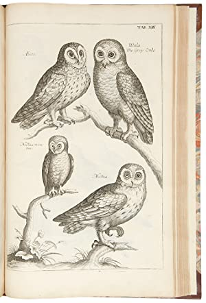 The Ornithology of Francis Willughby . In three books. Wherein all the birds hitherto known . are ...