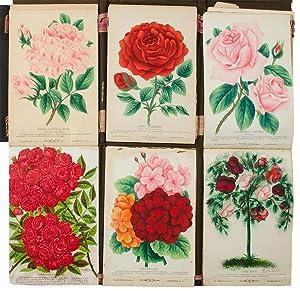 A bound collection of coloured botanical specimen plates: POMOLOGY & HORTICULTURE - M. BRUNSWICK & ...