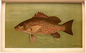 The Fishes of North America that are captured on Hook and Line. With eighty colored plates made f...