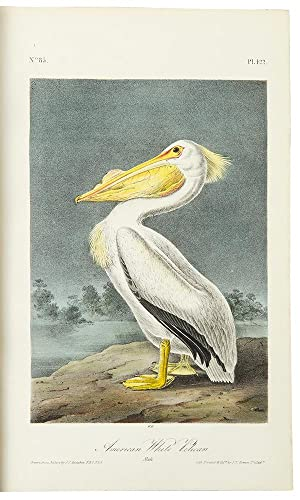 The Birds of America, from drawings made: AUDUBON, John James