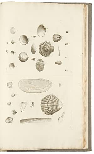 Catalogues of the birds, shells, and some of the more rare plants, of Dorsetshire. From the new a...