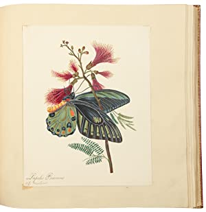 An album of drawings and watercolours of natural history and topographical subjects, and includin...