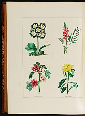 The Botanic Garden, consisting of highly finished representations of hardy ornamental flowering p...