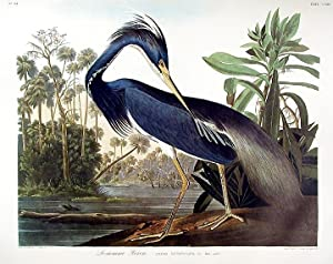 Birds of America Elephant FOLIO Blue Crane or Heron Audubon Ariel Press