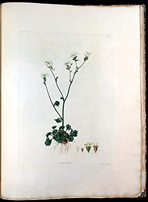 Select Specimens of British Plants: FREEMAN, Strickland (d.1821), [& Dr. George SHAW (1751-1813). -...