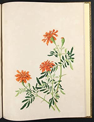 An album of original Chinese watercolours of flowering plants: CHINA, Company School