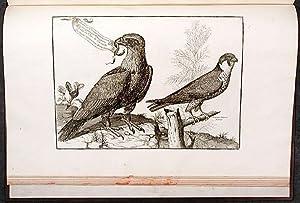 Collection d'oiseaux les plus rares gravés et: JONSTON, John (1603-1675)