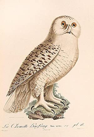 Histoire Naturelle des Oiseaux de l'Amérique Septentrionale,: VIEILLOT, Louis Jean