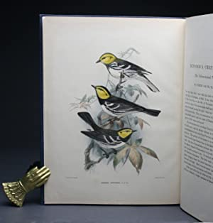 THE YELLOW CHEEKED WARBLER.