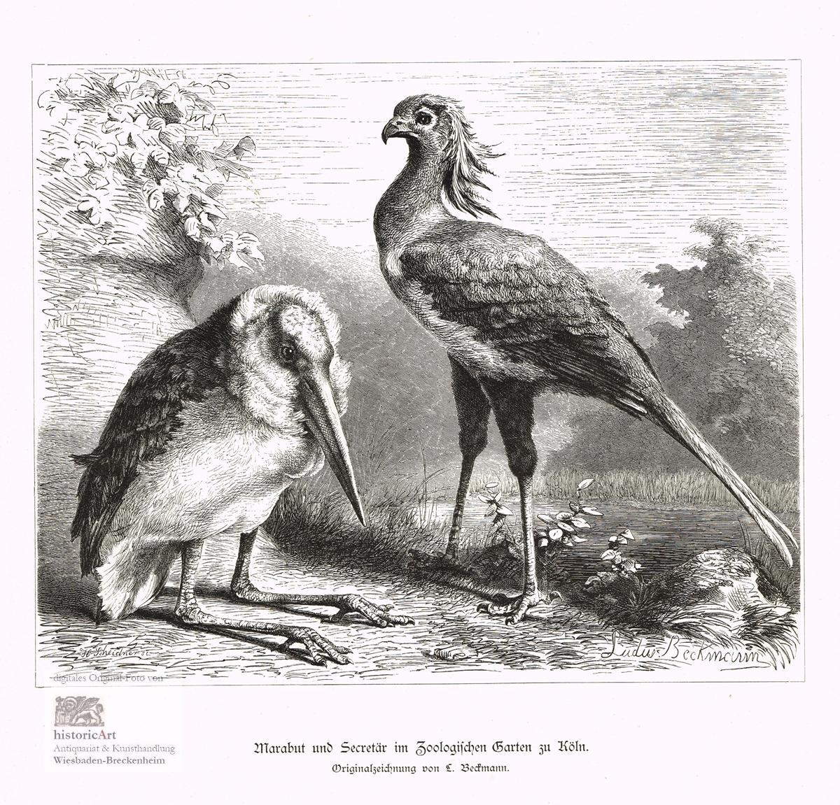 Marabut Und Secretär Im Zoologischen Garten Zu: Ludwig Beckmann (