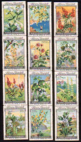 Plantes Legumineuses. Serie XVIII. Komplette Serie mit: Peter, Cailler, Kohler,