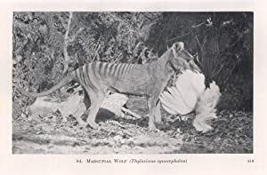 The Wild Animals of Australasia. Embracing the: LE SOUEF, A.S.