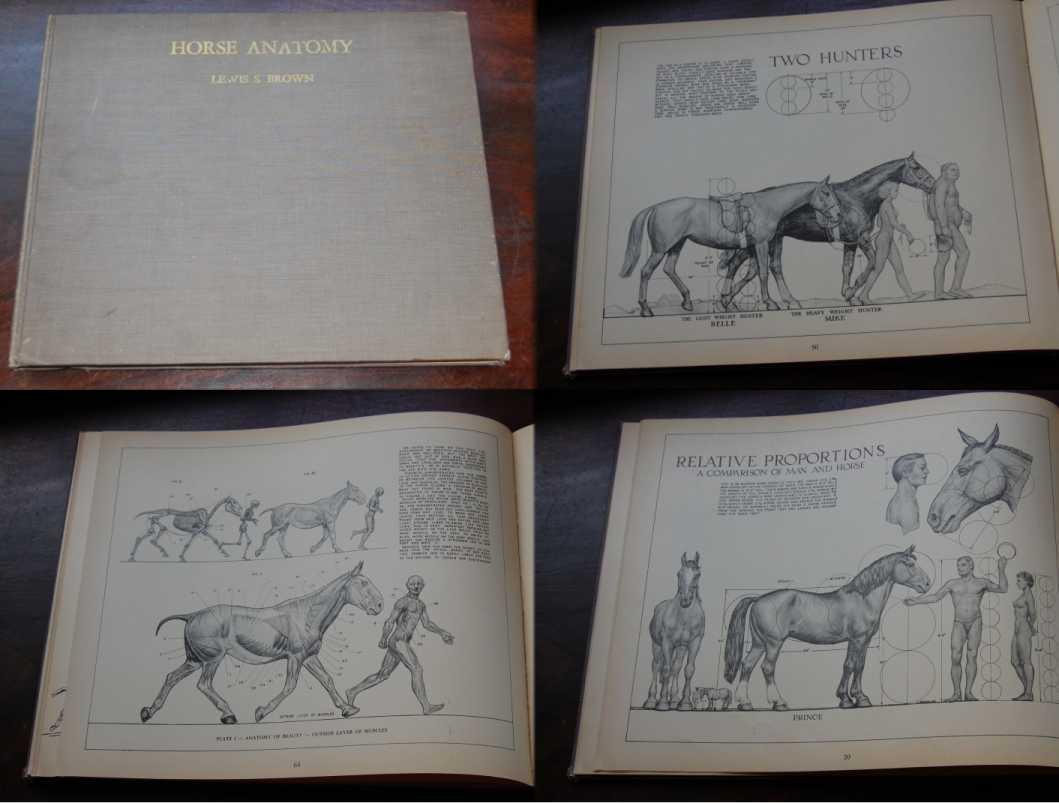 Horse Anatomy A Handbook for Artists Comprising the Study of the ...