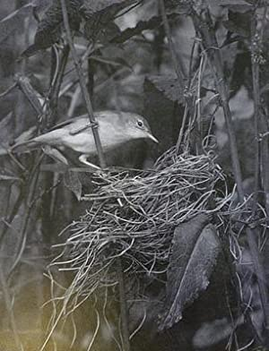The Breeding Birds of Somerset and their Eggs: Lewis Stanley